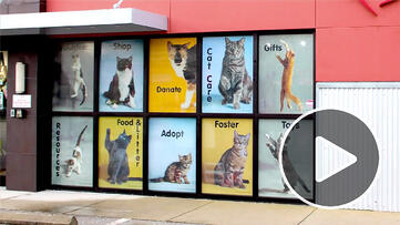 Cat-Depot_Thumb